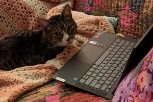 Leo the Cat at Computer